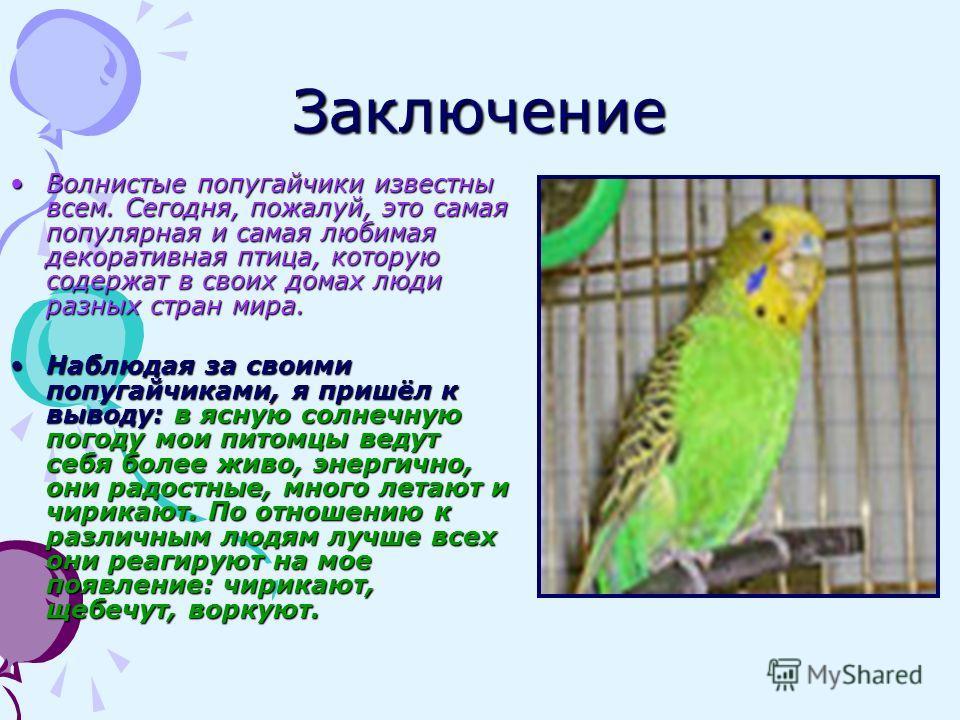 Заключение Волнистые попугайчики известны всем. Сегодня, пожалуй, это самая популярная и самая любимая декоративная птица, которую содержат в своих домах люди разных стран мира.Волнистые попугайчики известны всем. Сегодня, пожалуй, это самая популярн