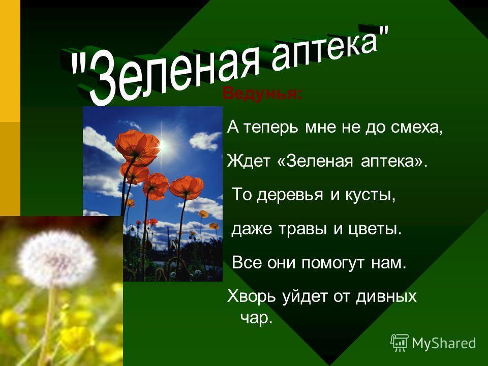 Ведунья: А теперь мне не до смеха, Ждет «Зеленая аптека». То деревья и кусты, даже травы и цветы. Все они помогут нам. Хворь уйдет от дивных чар.