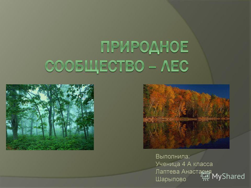 Выполнила: Ученица 4 А класса Лаптева Анастасия Шарыпово