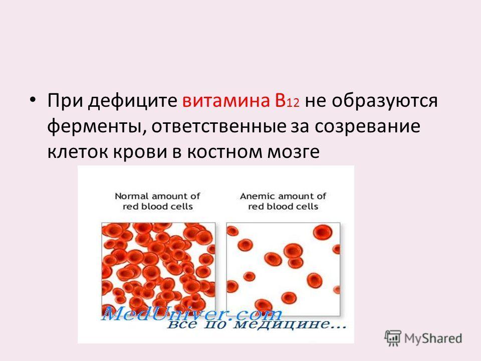 При дефиците витамина В 12 не образуются ферменты, ответственные за созревание клеток крови в костном мозге