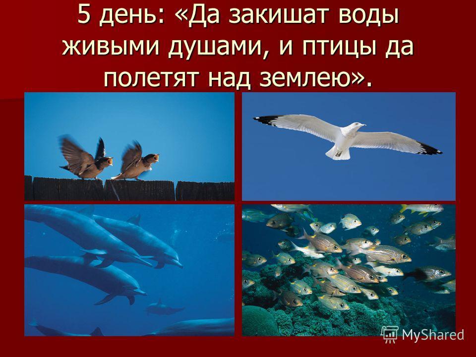 5 день: «Да закишат воды живыми душами, и птицы да полетят над землею».