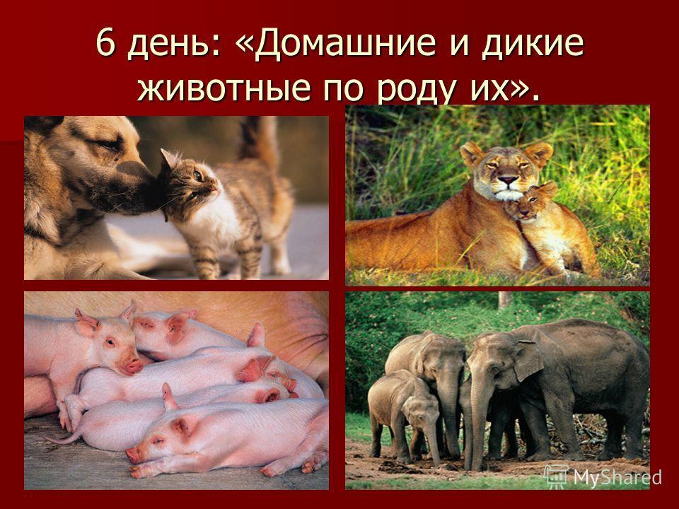 6 день: «Домашние и дикие животные по роду их».