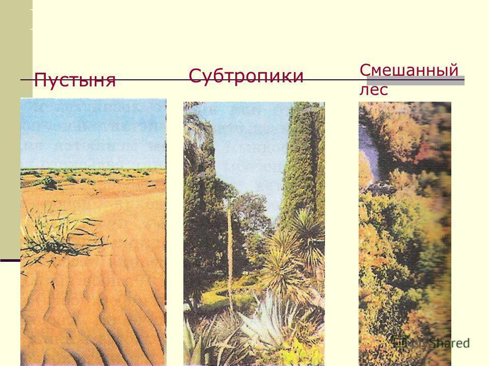 Природные зоны России. Тайга евро- пейской части ЛесостепьСтепь