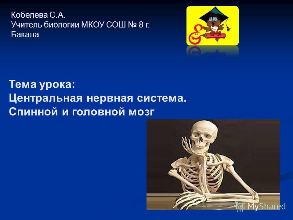Кобелева С.А. Учитель биологии МКОУ СОШ 8 г. Бакала Тема урока: Центральная нервная система. Спинной и головной мозг