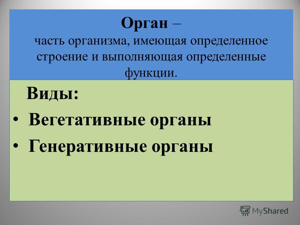 Орган – часть организма, имеющая определенное строение и выполняющая определенные функции. Виды: Вегетативные органы Генеративные органы