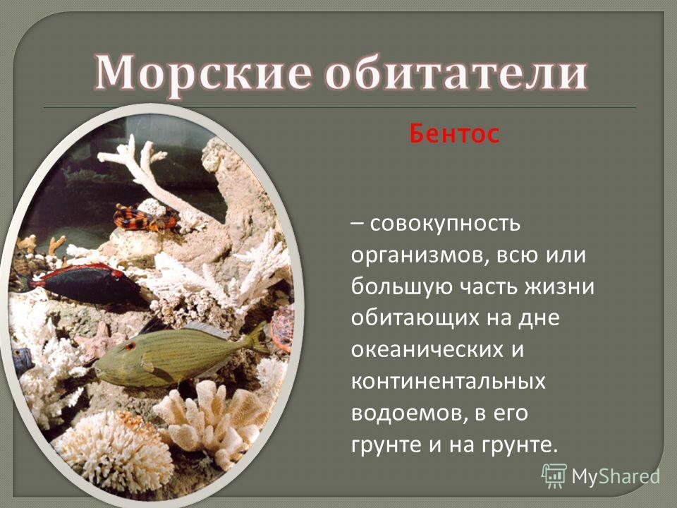 Бентос – совокупность организмов, всю или большую часть жизни обитающих на дне океанических и континентальных водоемов, в его грунте и на грунте.