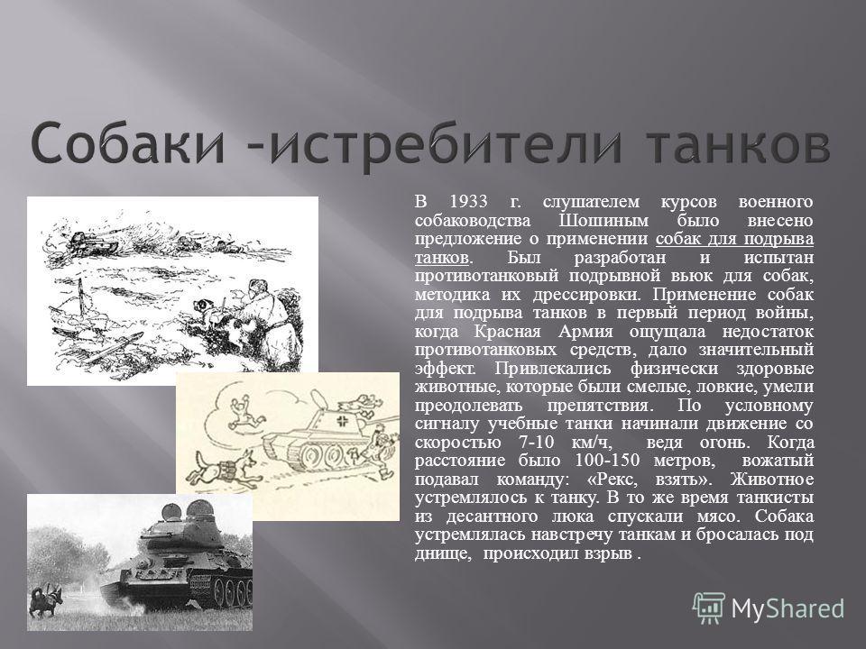 В 1933 г. слушателем курсов военного собаководства Шошиным было внесено предложение о применении собак для подрыва танков. Был разработан и испытан противотанковый подрывной вьюк для собак, методика их дрессировки. Применение собак для подрыва танков