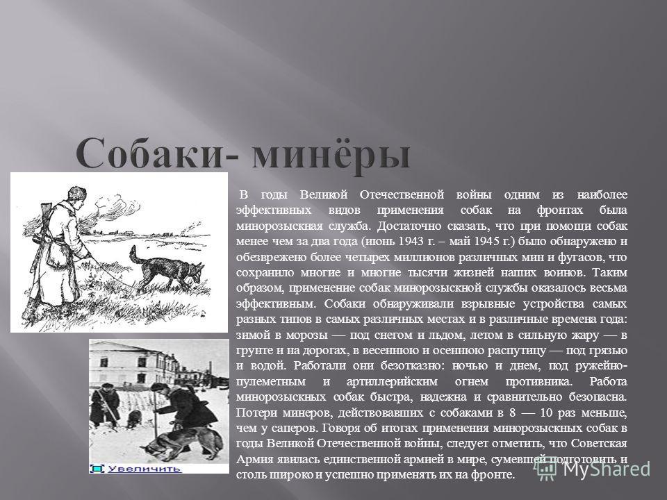 В годы Великой Отечественной войны одним из наиболее эффективных видов применения собак на фронтах была минорозыскная служба. Достаточно сказать, что при помощи собак менее чем за два года (июнь 1943 г. – май 1945 г.) было обнаружено и обезврежено бо
