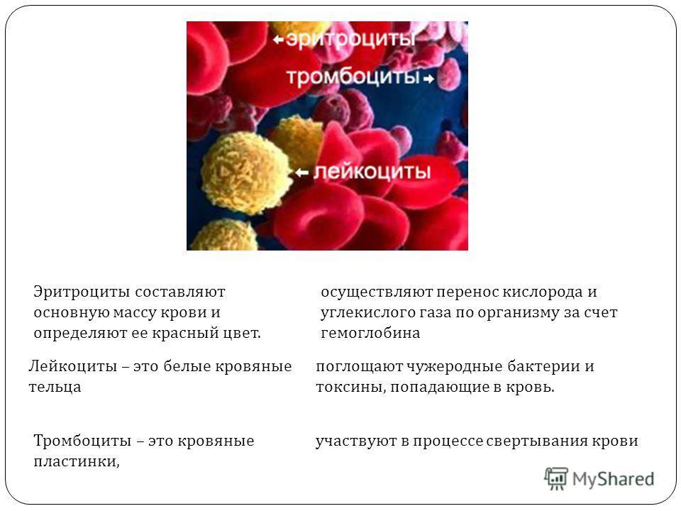 Эритроциты составляют основную массу крови и определяют ее красный цвет. Лейкоциты – это белые кровяные тельца Тромбоциты – это кровяные пластинки, осуществляют перенос кислорода и углекислого газа по организму за счет гемоглобина поглощают чужеродны