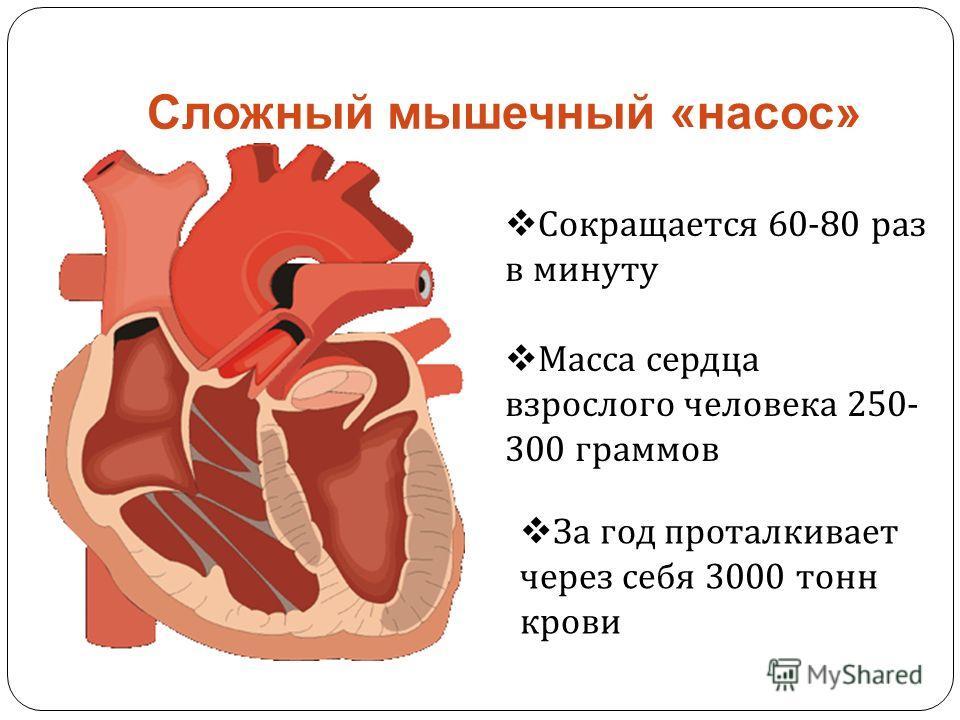 Сложный мышечный «насос» Сокращается 60-80 раз в минуту За год проталкивает через себя 3000 тонн крови Масса сердца взрослого человека 250- 300 граммов