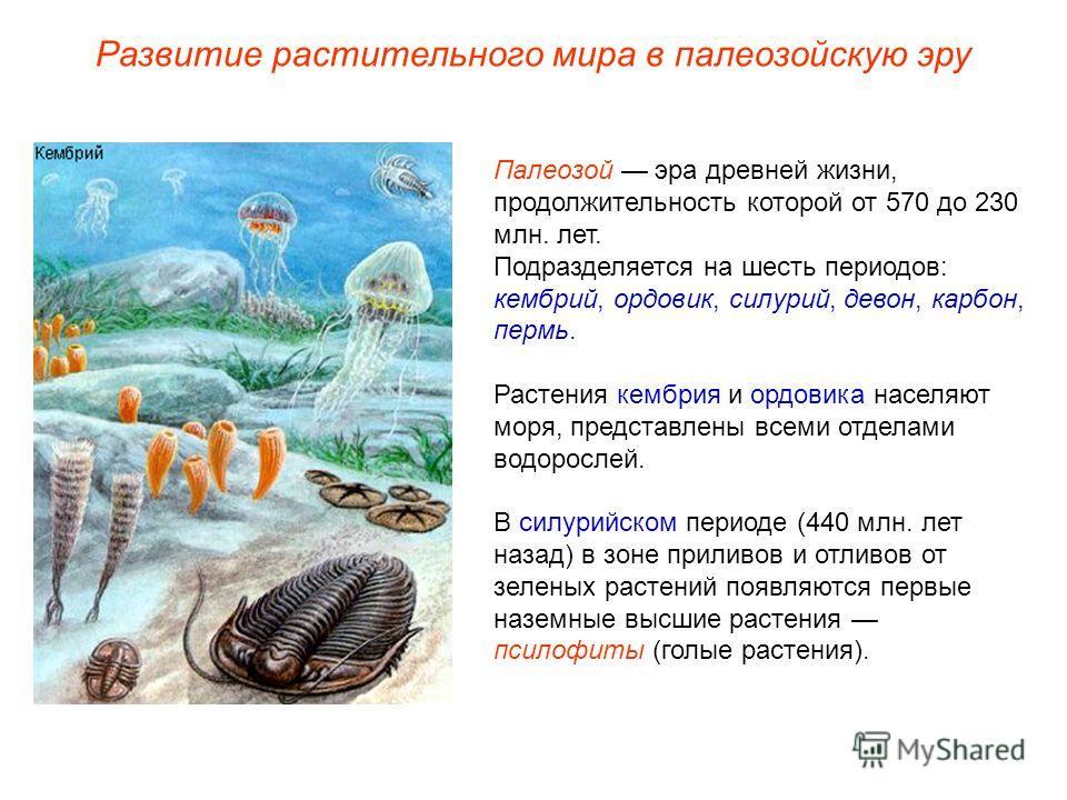 Палеозой эра древней жизни, продолжительность которой от 570 до 230 млн. лет. Подразделяется на шесть периодов: кембрий, ордовик, силурий, девон, карбон, пермь. Растения кембрия и ордовика населяют моря, представлены всеми отделами водорослей. В силу