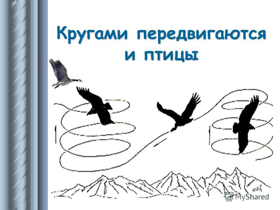Кругами передвигаются и птицы