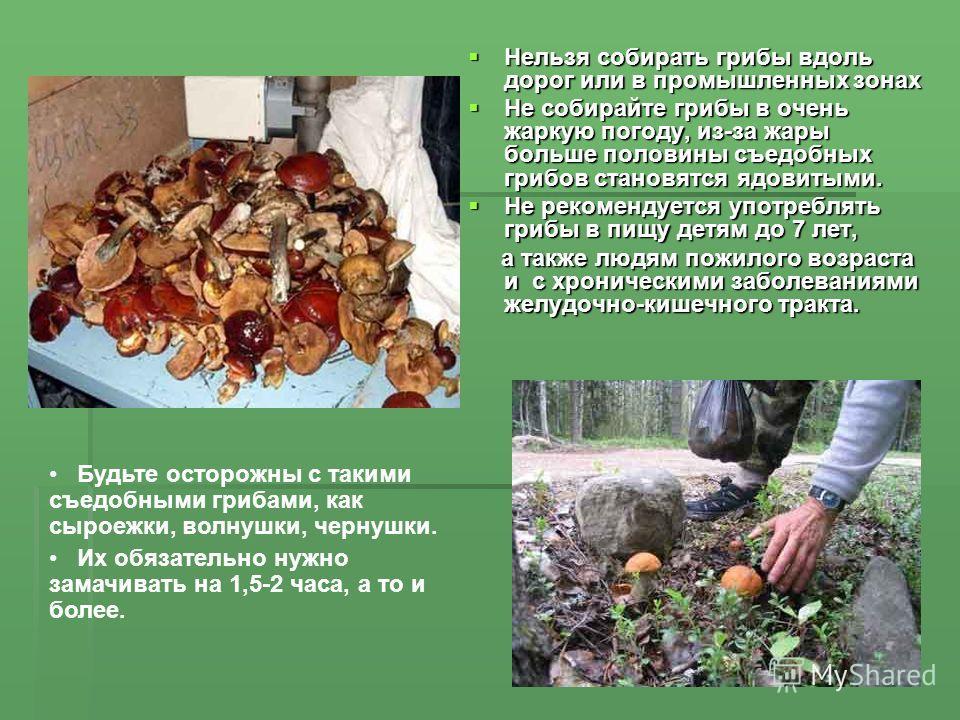 Нельзя собирать грибы вдоль дорог или в промышленных зонах Нельзя собирать грибы вдоль дорог или в промышленных зонах Не собирайте грибы в очень жаркую погоду, из-за жары больше половины съедобных грибов становятся ядовитыми. Не собирайте грибы в оче