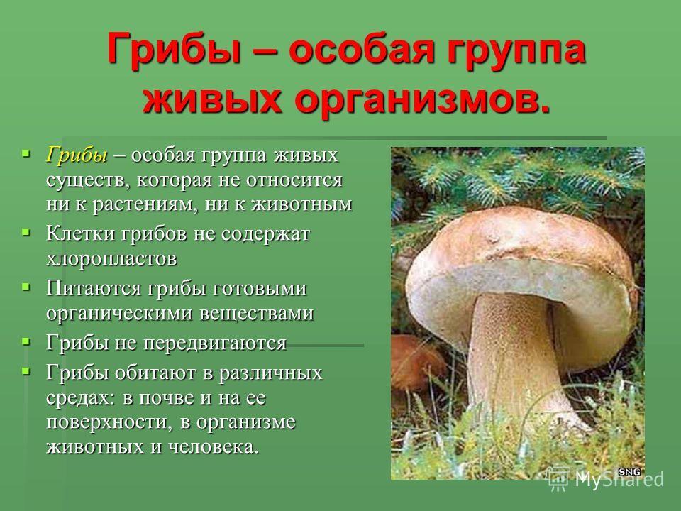 Грибы – особая группа живых организмов. Грибы – особая группа живых существ, которая не относится ни к растениям, ни к животным Грибы – особая группа живых существ, которая не относится ни к растениям, ни к животным Клетки грибов не содержат хлоропла