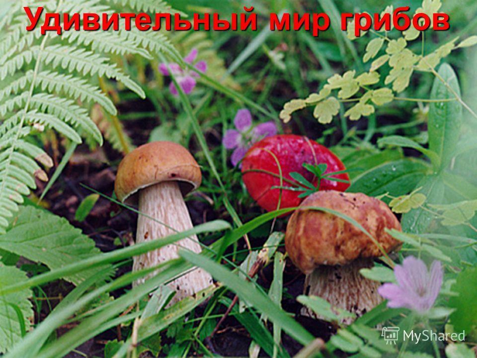 Удивительный мир грибов