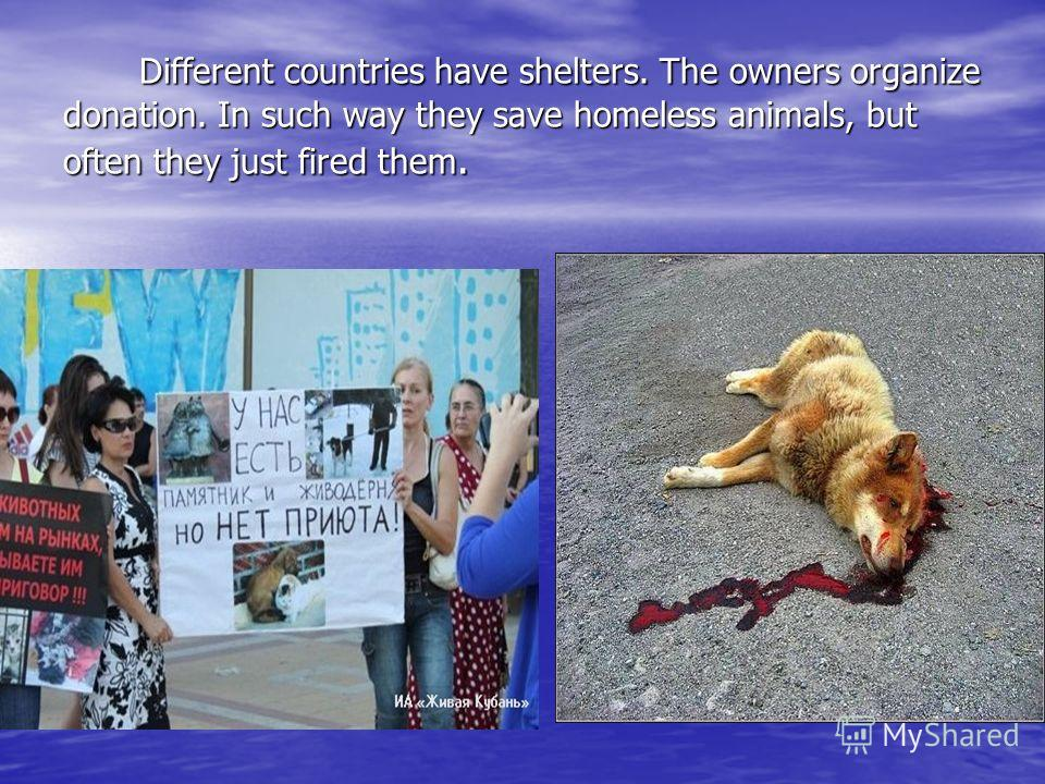 Different countries have shelters. The owners organize donation. In such way they save homeless animals, but often they just fired them. Different countries have shelters. The owners organize donation. In such way they save homeless animals, but ofte