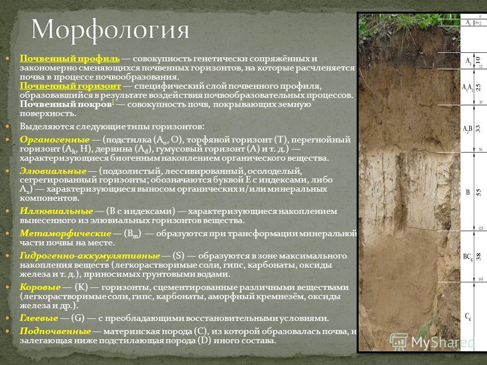 Почвенный профиль совокупность генетически сопряжённых и закономерно сменяющихся почвенных горизонтов, на которые расчленяется почва в процессе почвообразования. Почвенный горизонт специфический слой почвенного профиля, образовавшийся в результате во