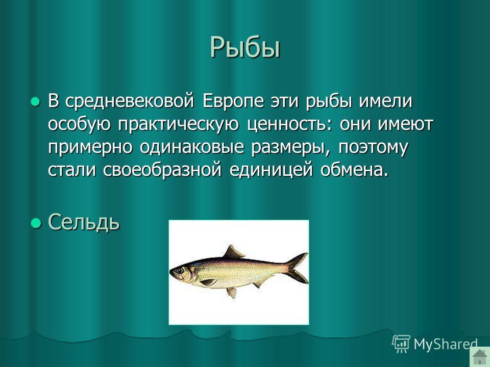 Рыбы В средневековой Европе эти рыбы имели особую практическую ценность: они имеют примерно одинаковые размеры, поэтому стали своеобразной единицей обмена. В средневековой Европе эти рыбы имели особую практическую ценность: они имеют примерно одинако
