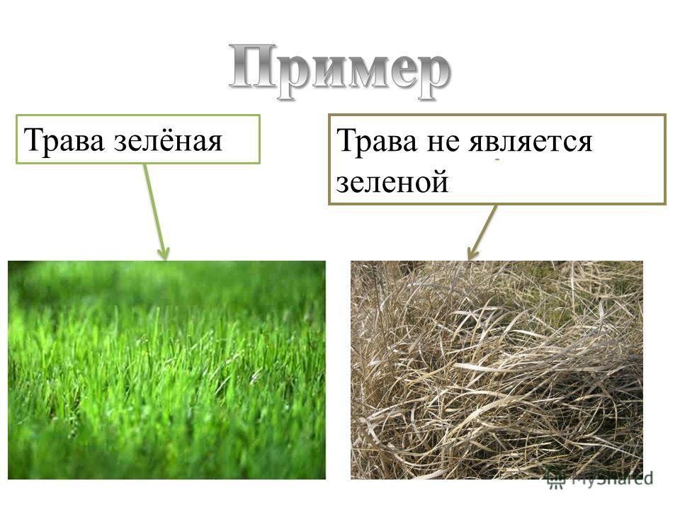 Трава зелёная Трава не является зеленой