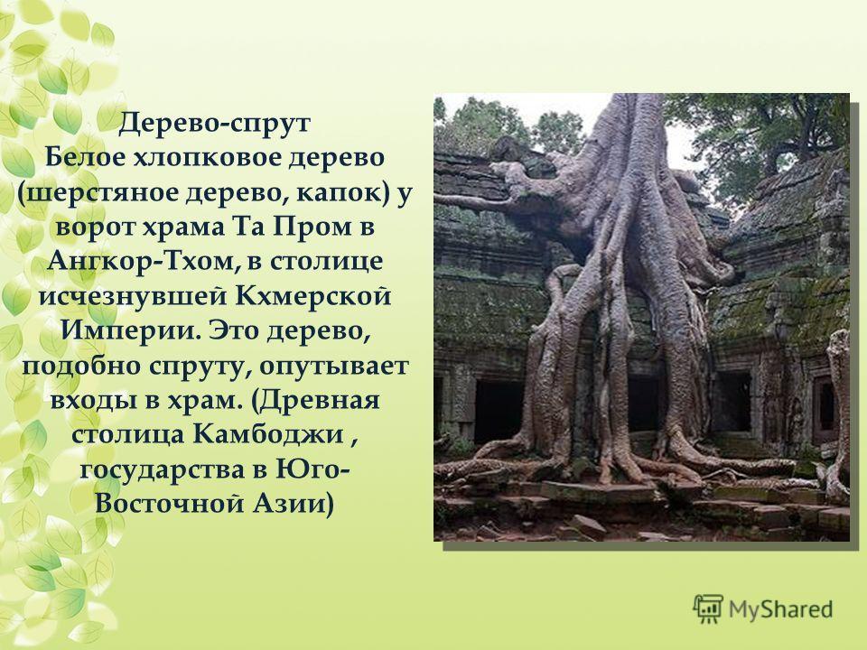Дерево-спрут Белое хлопковое дерево (шерстяное дерево, капок) у ворот храма Та Пром в Ангкор-Тхом, в столице исчезнувшей Кхмерской Империи. Это дерево, подобно спруту, опутывает входы в храм. (Древная столица Камбоджи, государства в Юго- Восточной Аз