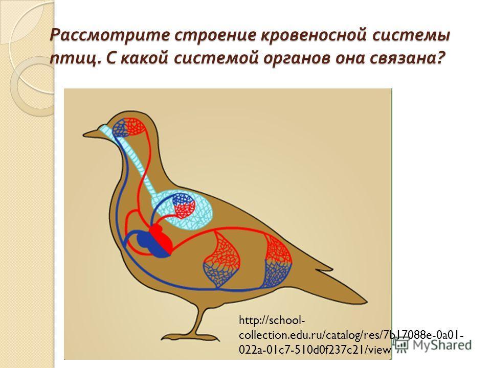 Рассмотрите строение кровеносной системы птиц. С какой системой органов она связана ? http://school- collection.edu.ru/catalog/res/7b17088e-0a01- 022a-01c7-510d0f237c21/view