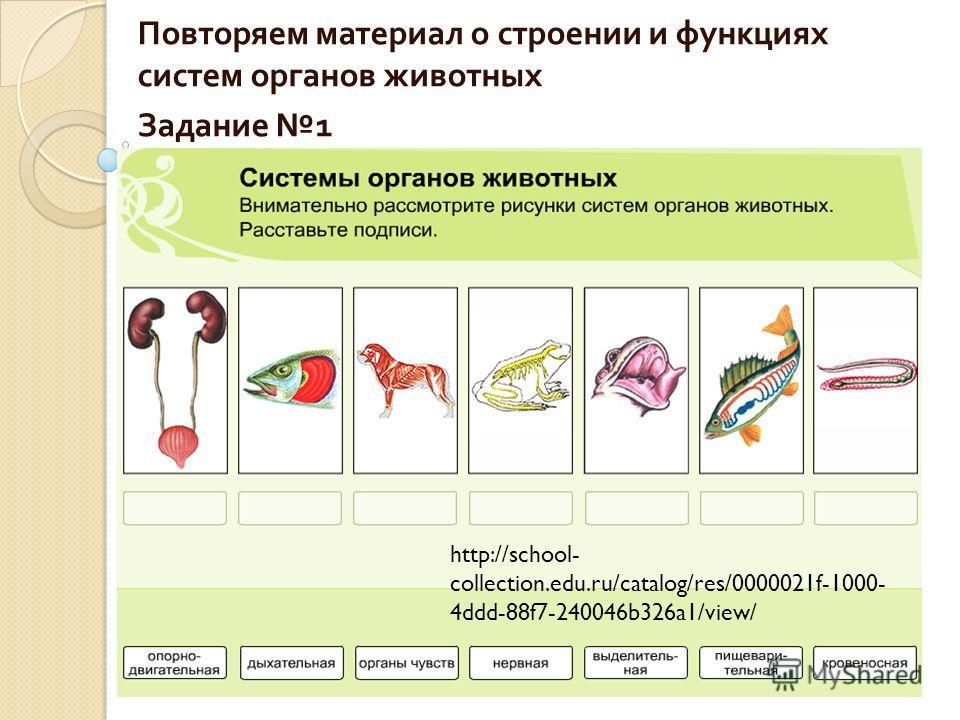 Тесты на тему системы органов биология 6 класс