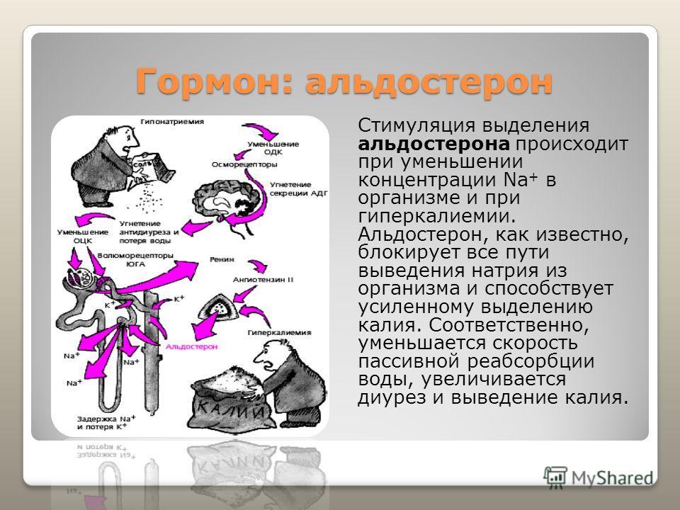 Гормон: альдостерон Стимуляция выделения альдостерона происходит при уменьшении концентрации Na + в организме и при гиперкалиемии. Альдостерон, как известно, блокирует все пути выведения натрия из организма и способствует усиленному выделению калия.
