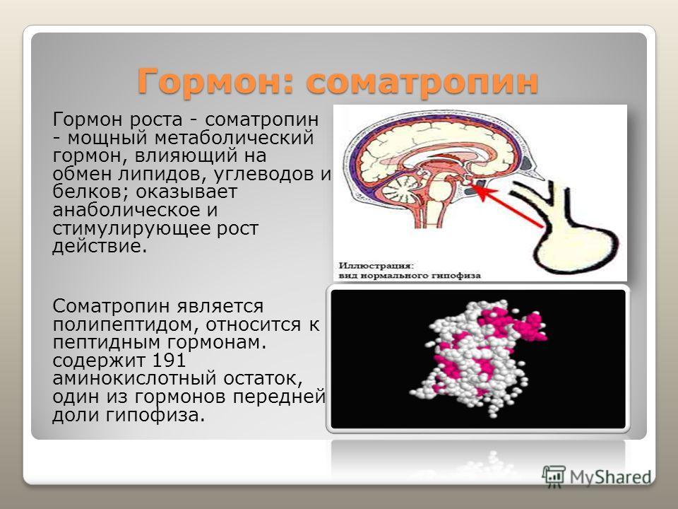Гормон: соматропин Гормон роста - соматропин - мощный метаболический гормон, влияющий на обмен липидов, углеводов и белков; оказывает анаболическое и стимулирующее рост действие. Соматропин является полипептидом, относится к пептидным гормонам. содер