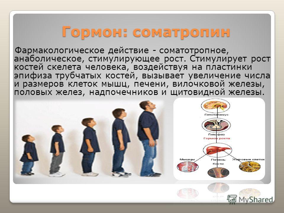 Гормон: соматропин Фармакологическое действие - соматотропное, анаболическое, стимулирующее рост. Стимулирует рост костей скелета человека, воздействуя на пластинки эпифиза трубчатых костей, вызывает увеличение числа и размеров клеток мышц, печени, в
