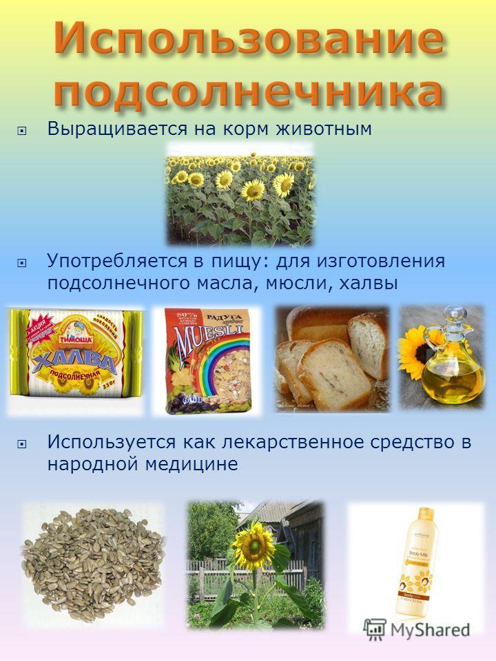 Выращивается на корм животным Употребляется в пищу: для изготовления подсолнечного масла, мюсли, халвы Используется как лекарственное средство в народной медицине