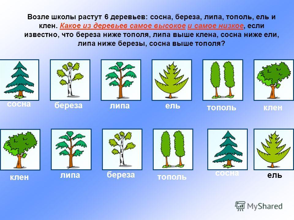 Возле школы растут 6 деревьев: сосна, береза, липа, тополь, ель и клен. Какое из деревьев самое высокое и самое низкое, если известно, что береза ниже тополя, липа выше клена, сосна ниже ели, липа ниже березы, сосна выше тополя? сосна береза липаель