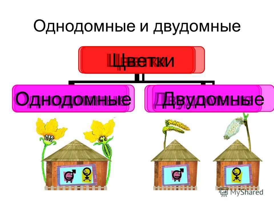 Однодомные и двудомные Цветки ОднодомныеДвудомные Цветки ОднодомныеДвудомные Цветки ОднодомныеДвудомные