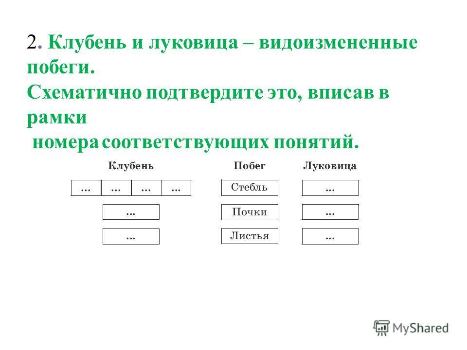 2. Клубень и луковица – видоизмененные побеги. Схематично подтвердите это, вписав в рамки номера соответствующих понятий.