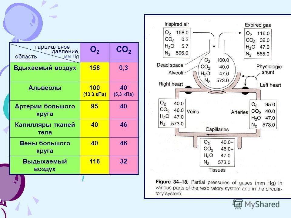 О2О2 СО 2 Вдыхаемый воздух1580,3 Альвеолы100 (13,3 кПа) 40 (5,3 кПа) Артерии большого круга 9540 Капилляры тканей тела 4046 Вены большого круга 4046 Выдыхаемый воздух 11632 парциальное давление, мм Hg область