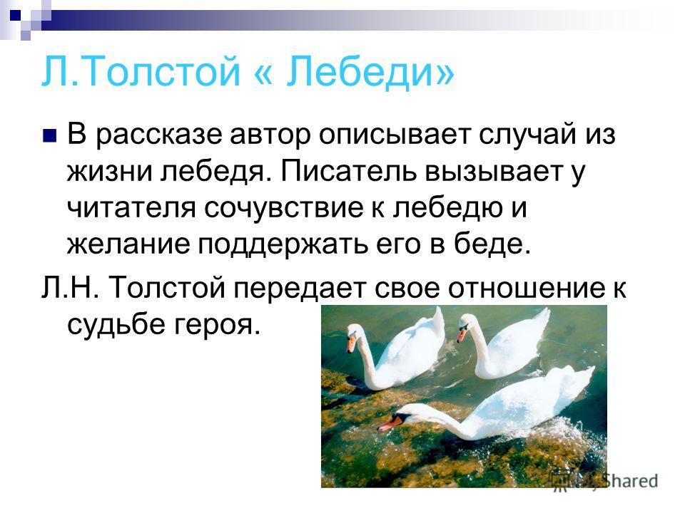 Л.Толстой « Лебеди» В рассказе автор описывает случай из жизни лебедя. Писатель вызывает у читателя сочувствие к лебедю и желание поддержать его в беде. Л.Н. Толстой передает свое отношение к судьбе героя.