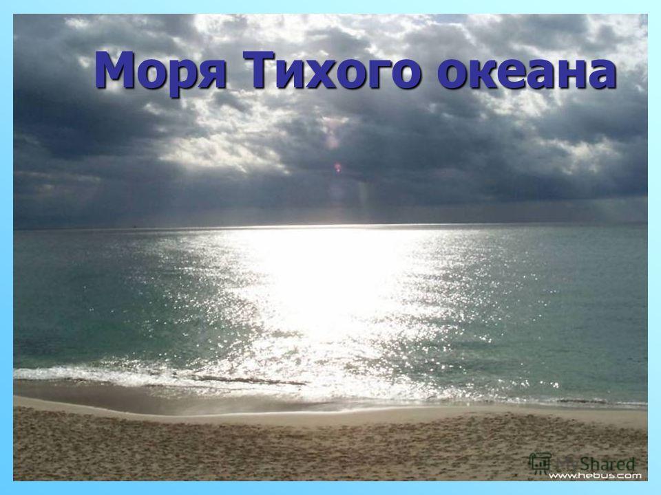 Моря Тихого океана Моря Тихого океана
