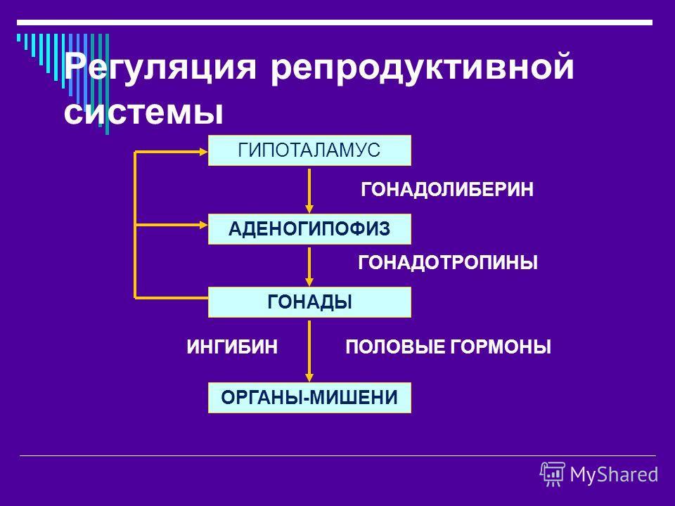 Регуляция репродуктивной системы АДЕНОГИПОФИЗ ГОНАДЫ ОРГАНЫ-МИШЕНИ ГИПОТАЛАМУС ГОНАДОТРОПИНЫ ГОНАДОЛИБЕРИН ПОЛОВЫЕ ГОРМОНЫ ИНГИБИН
