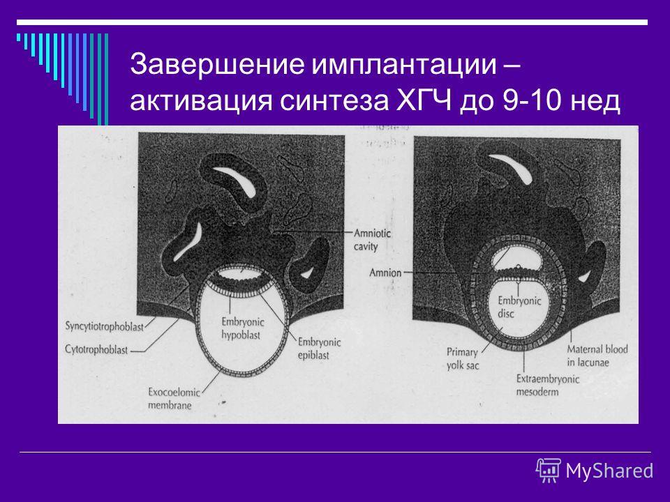 Завершение имплантации – активация синтеза ХГЧ до 9-10 нед