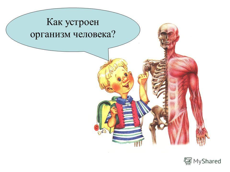 Как устроен организм человека?