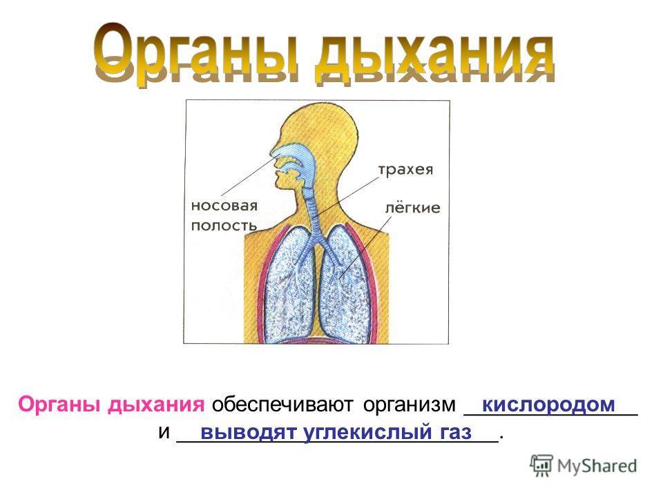 Органы дыхания обеспечивают организм ______________ и __________________________. кислородом выводят углекислый газ