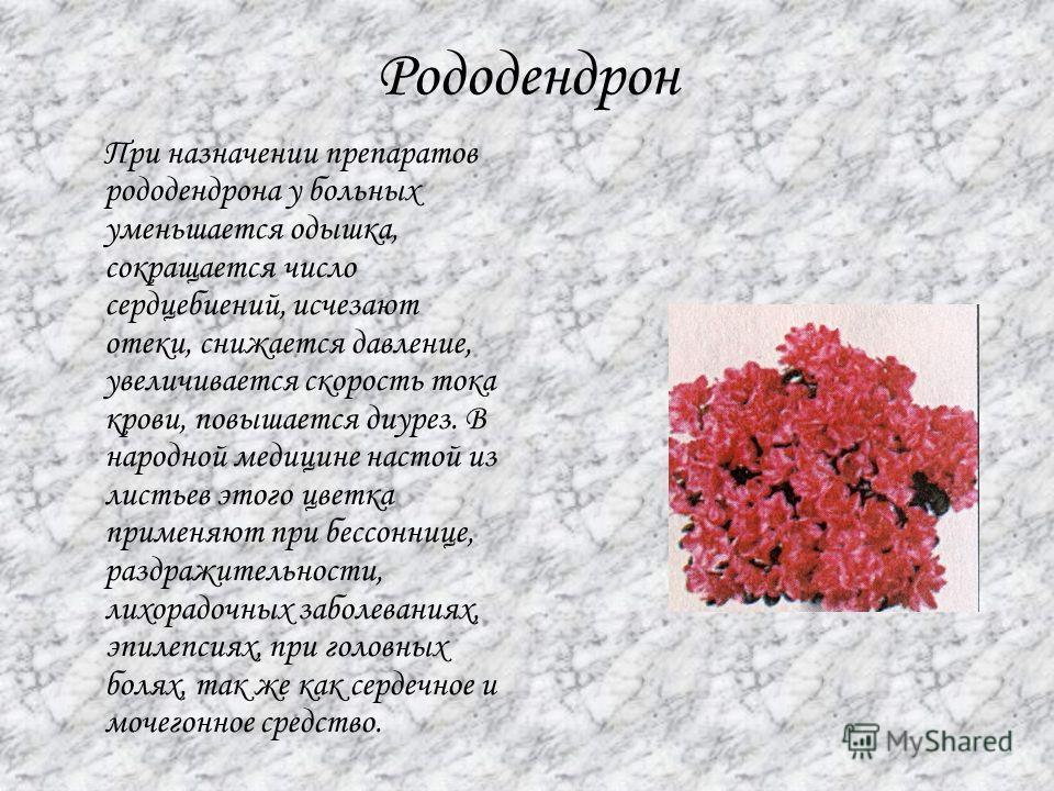 Рододендрон При назначении препаратов рододендрона у больных уменьшается одышка, сокращается число сердцебиений, исчезают отеки, снижается давление, увеличивается скорость тока крови, повышается диурез. В народной медицине настой из листьев этого цве