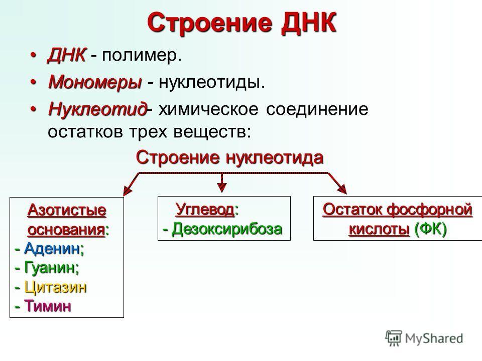 Строение ДНК ДНКДНК - полимер. МономерыМономеры - нуклеотиды. Нуклеотид-Нуклеотид- химическое соединение остатков трех веществ: Азотистые Азотистые основания: основания: - Аденин; - Гуанин; - Цитазин - Тимин Строение нуклеотида Углевод: Углевод: - Де