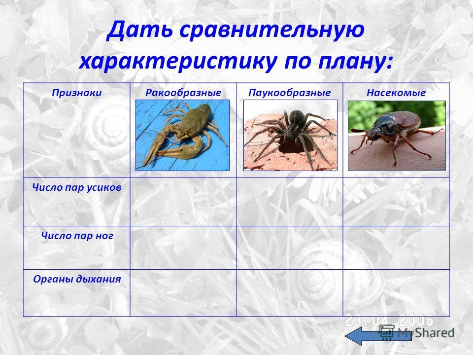Дать сравнительную характеристику по плану: ПризнакиРакообразныеПаукообразныеНасекомые Число пар усиков Число пар ног Органы дыхания