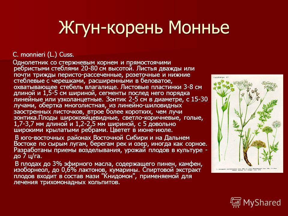 Жгун-корень Моннье C. monnieri (L.) Cuss. Однолетник со стержневым корнем и прямостоячими ребристыми стеблями 20-80 см высотой. Листья дважды или почти трижды перисто-рассеченные, розеточные и нижние стеблевые с черешками, расширенными в беловатое, о