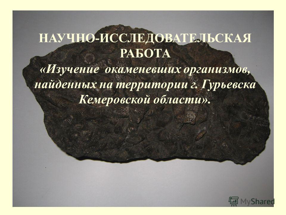 НАУЧНО-ИССЛЕДОВАТЕЛЬСКАЯ РАБОТА «Изучение окаменевших организмов, найденных на территории г. Гурьевска Кемеровской области».