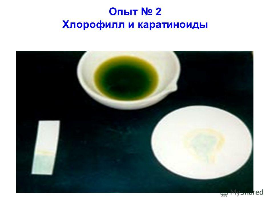 Опыт 2 Хлорофилл и каратиноиды