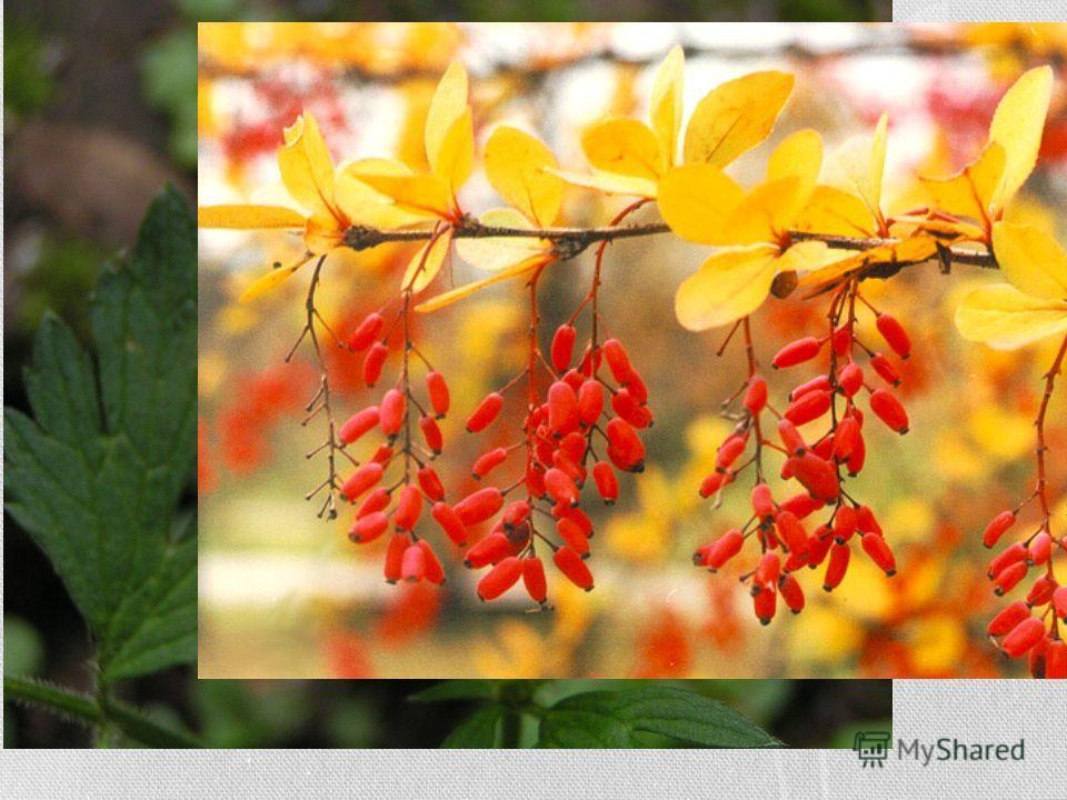 Значение Для репродукции растений гинецей имеет первенствующее значение, ибо он, после оплодотворения, разрастается в плод с семенами. Сообразно этому его значению и разные части его имеют различную степень важности для растений. Важнейшая его часть