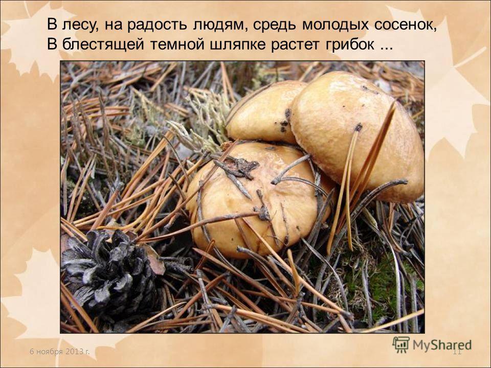 6 ноября 2013 г.11 В лесу, на радость людям, средь молодых сосенок, В блестящей темной шляпке растет грибок...