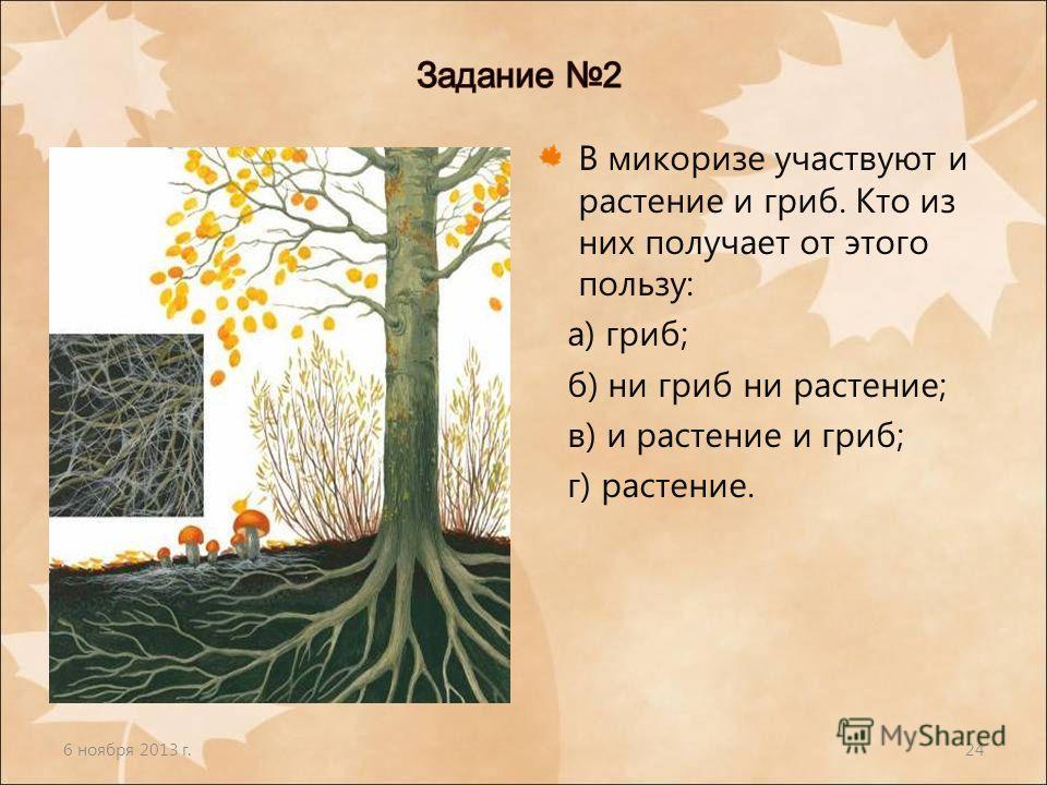 6 ноября 2013 г.24 В микоризе участвуют и растение и гриб. Кто из них получает от этого пользу: а) гриб; б) ни гриб ни растение; в) и растение и гриб; г) растение.
