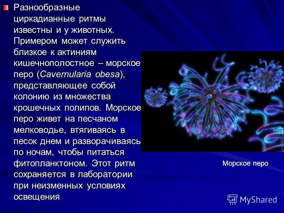 Биологические процессы с циркадианной периодичностью весьма разнообразны. Например, три вида светящихся грибов усиливают и ослабляют свое свечение каждые 24 часа, даже если искусственно держать их при постоянном свете или в полной темноте. Ежесуточно
